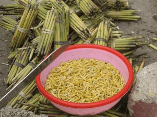 Sâu chít – Món ăn độc đáo của người Điện Biên
