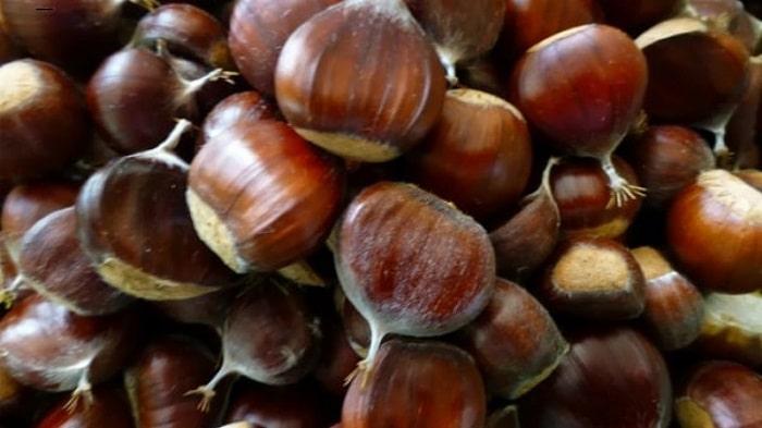 Vỏ hạt dẻ sẽ khá bóng, có màu tươi tự nhiên và bên ngoài sẽ có lớp lông tơ bám vào
