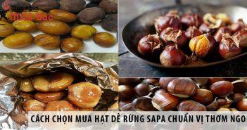 Cách chọn mua hạt dẻ rừng Sapa chuẩn vị thơm ngon