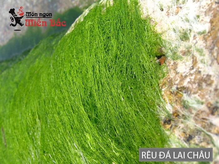 Rêu đá được tìm thấy ở những bờ suối