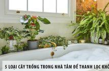 5 loại cây trồng trong nhà tắm để thanh lọc không khí