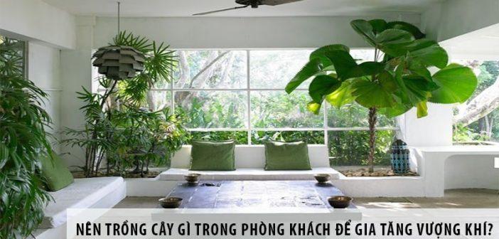 Nên trồng cây gì trong phòng khách để gia tăng vượng khí?