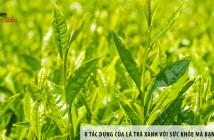 8 tác dụng của lá trà xanh với sức khỏe mà bạn chưa biết 7