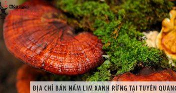 Địa chỉ bán nấm lim xanh rừng tỉnh Tuyên Quang uy tín